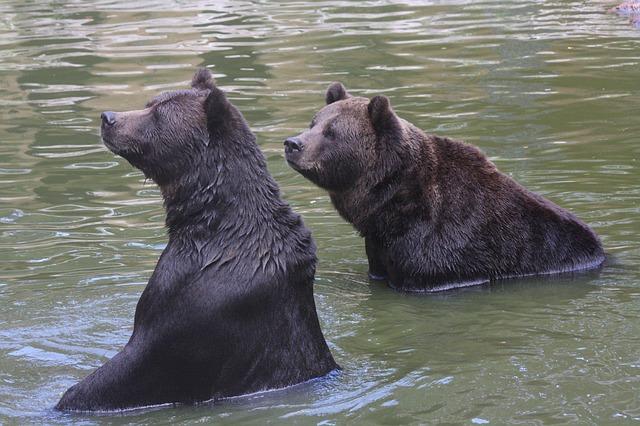 bear-103331_640